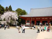 2013春賞櫻8日行***DAY3 醍醐寺→金閣寺→平野神社:1541713091.jpg