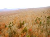 2013日本東北紅葉鐵腿行Day2 奧入瀨溪→十和田湖:P1120627.JPG