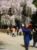 2013春賞櫻8日行***DAY3 醍醐寺→金閣寺→平野神社:1541713092.jpg