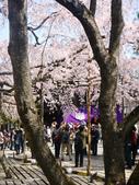 2013春賞櫻8日行***DAY3 醍醐寺→金閣寺→平野神社:1541713074.jpg