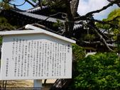 2014日本四國浪漫之旅DAY6松山城→道後溫泉周邊:P1180969.JPG
