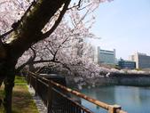 **春賞櫻8日行***Day8 大阪城→台灣:1230550003.jpg