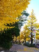 2013東京生日之旅DAY3 外苑→明治神宮→代官山→自由之丘:P1170451.JPG