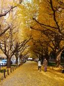 2013東京生日之旅DAY3 外苑→明治神宮→代官山→自由之丘:P1170396.JPG