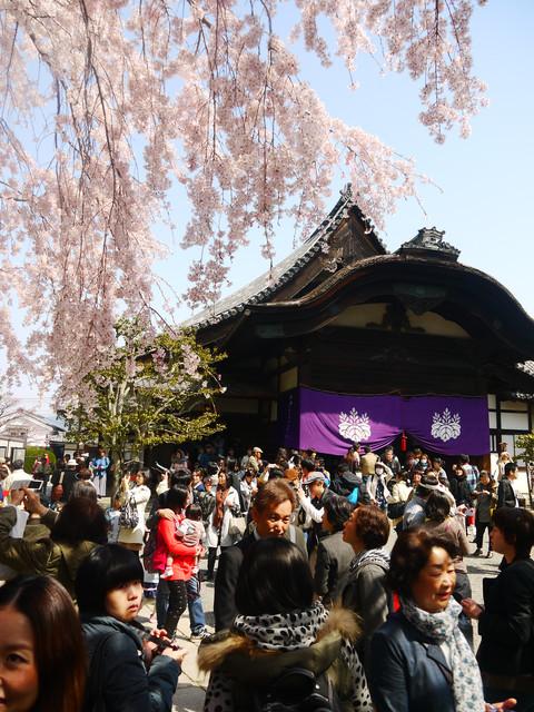 2013春賞櫻8日行***DAY3 醍醐寺→金閣寺→平野神社:1541713078.jpg