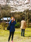 2013春賞櫻8日行***DAY3 醍醐寺→金閣寺→平野神社:1541713095.jpg