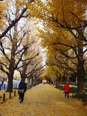 2013東京生日之旅DAY3 外苑→明治神宮→代官山→自由之丘:P1170389.JPG