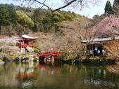 2013春賞櫻8日行***DAY3 醍醐寺→金閣寺→平野神社:1541713099.jpg