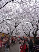 2013春賞櫻8日行***DAY3 醍醐寺→金閣寺→平野神社:1541713161.jpg