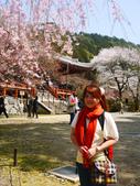 2013春賞櫻8日行***DAY3 醍醐寺→金閣寺→平野神社:1541713096.jpg