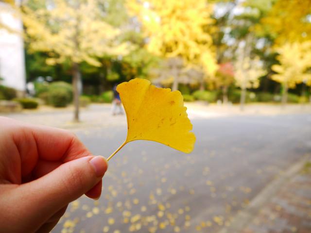 一個人的生日旅行~2011京阪行DAY4:1766151314.jpg
