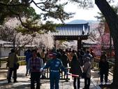 2013春賞櫻8日行***DAY3 醍醐寺→金閣寺→平野神社:1541713062.jpg