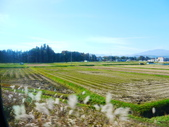 2013日本東北紅葉鐵腿行Day3田澤湖→乳頭溫泉鄉:P1130360.JPG