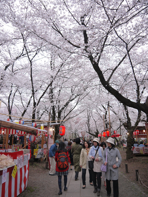 2013春賞櫻8日行***DAY3 醍醐寺→金閣寺→平野神社:1541713162.jpg
