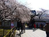 2013春賞櫻8日行***DAY3 醍醐寺→金閣寺→平野神社:1541713063.jpg