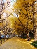 2013東京生日之旅DAY3 外苑→明治神宮→代官山→自由之丘:P1170392.JPG