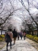2013春賞櫻8日行***DAY3 醍醐寺→金閣寺→平野神社:1541713116.jpg