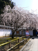 2013春賞櫻8日行***DAY3 醍醐寺→金閣寺→平野神社:1541713064.jpg