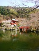 2013春賞櫻8日行***DAY3 醍醐寺→金閣寺→平野神社:1541713098.jpg