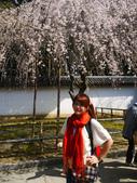 2013春賞櫻8日行***DAY3 醍醐寺→金閣寺→平野神社:1541713065.jpg