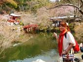 2013春賞櫻8日行***DAY3 醍醐寺→金閣寺→平野神社:1541713100.jpg
