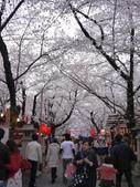 2013春賞櫻8日行***DAY3 醍醐寺→金閣寺→平野神社:1541713164.jpg