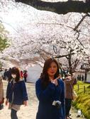 2013春賞櫻8日行***DAY3 醍醐寺→金閣寺→平野神社:1541713066.jpg