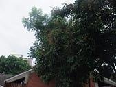 20110827-29馬拉灣及科博館台中之旅:台中東海大學 (4