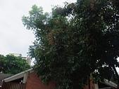 20110827-29馬拉灣及科博館台中之旅:台中東海大學 (5