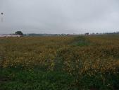 20111211台中新社花海節:20111211新社花海節 (2).JPG