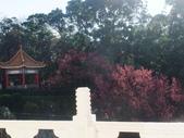 20120212淡水天元宮:20120212淡水天元宮 (9).JPG