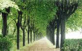 雨景動畫圖:259811028_l.jpg