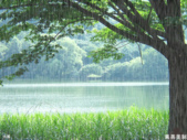 雨景動畫圖:259811018_l.jpg