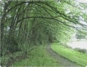 雨景動畫圖:259811034_l.jpg