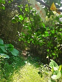 豹山溪:2013-06-29 12.35.29.jpg