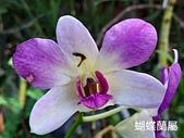 2018-2020台南市:20210122_124934.jpg