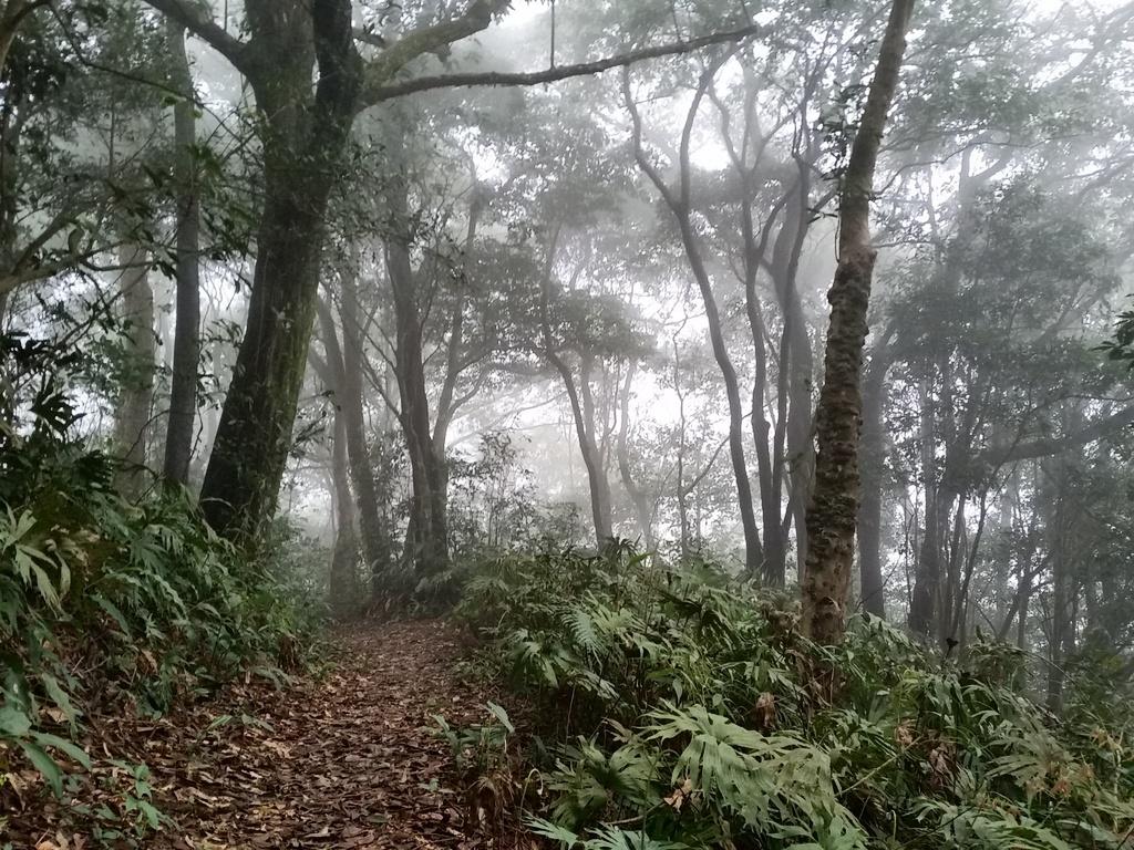 20150308_150850.jpg - 台北縣的山