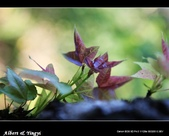1Y:nEO_IMG_DPP_0182.jpg
