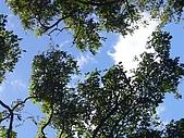 陽明山野餐踏青(20050917):仰望天空