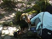 陽明山野餐踏青(20050917):無辜的米格魯