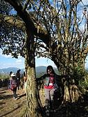971123 基隆十方傳情:老榕樹的柺杖