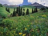 BART相簿:Alpine Meadow of Sneezeweed, Asters, Paintbrush, and Hellebore, Sneffels Ra