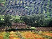 BART相簿:Andalucia, Spain.jpg