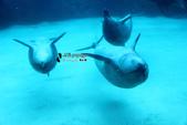 [名古屋] 名古屋港水族館:名古屋港水族館 (2).jpg