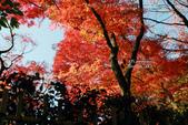 [京都] 東福寺:東福寺 (18).jpg