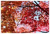 [京都] 東福寺:東福寺 (24).jpg
