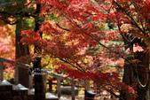 [京都] 東福寺:東福寺 (6).jpg