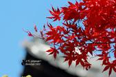 [京都] 東福寺:東福寺 (8).jpg