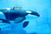 [名古屋] 名古屋港水族館:名古屋港水族館 (1).jpg