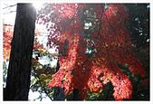 [京都] 東福寺:東福寺 (28).jpg